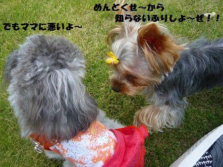 s-2009_0922_121432-P1020131.jpg