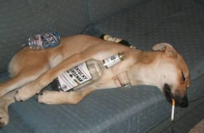 drunkdog.jpg