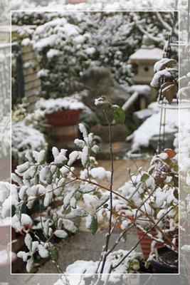 雪景色 2月2日