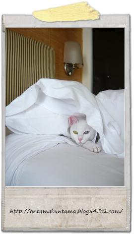 cat09101201