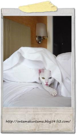 cat09101202