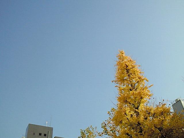NEC_0191.jpg