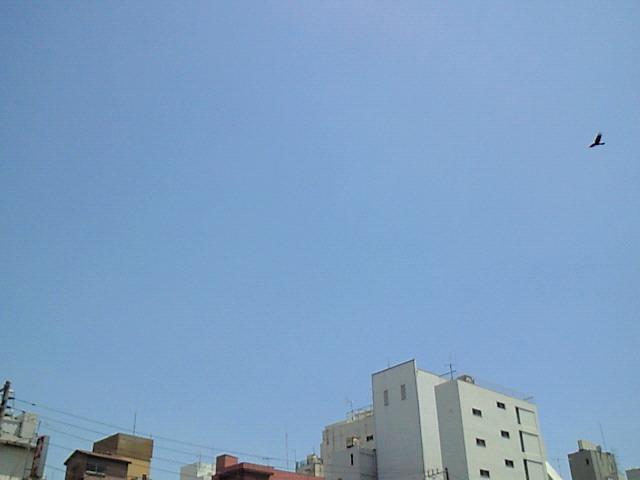 NEC_0511.jpg