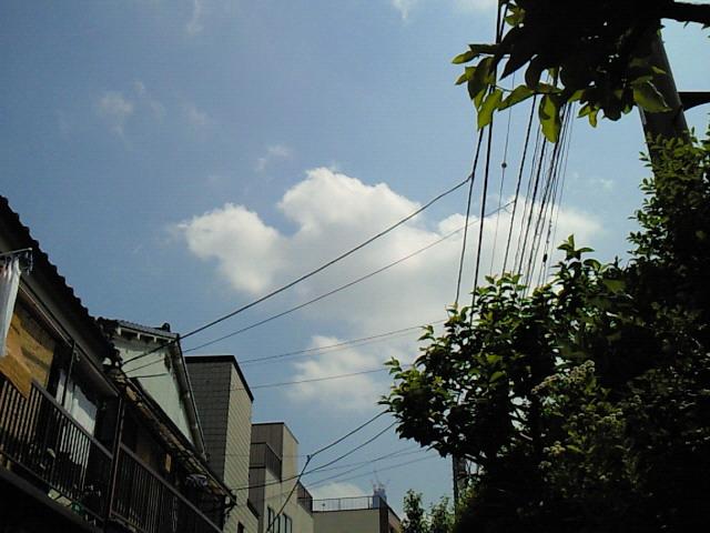 NEC_0514.jpg