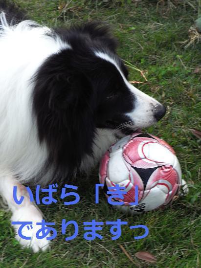 いばらき2