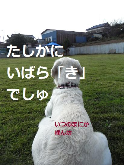 いばらき6