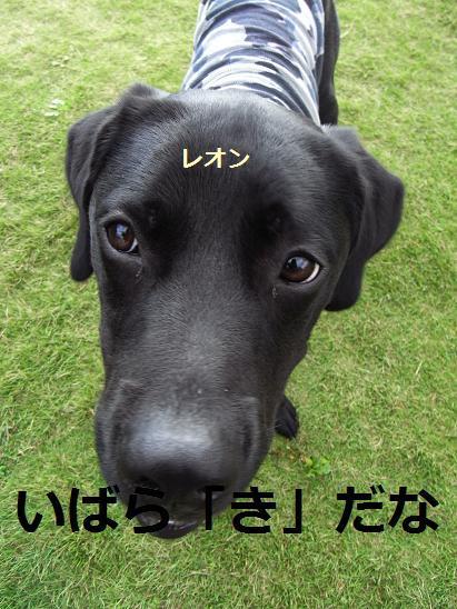 いばらき4
