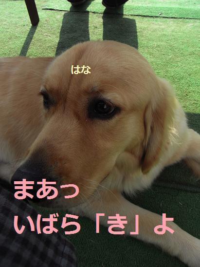 いばらき3
