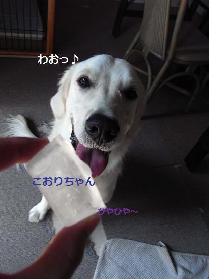こおりちゃん