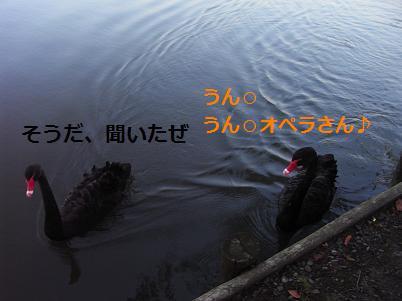 黒鳥さん2