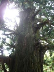 木の中に入れます