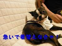 PA030605_01-1.jpg