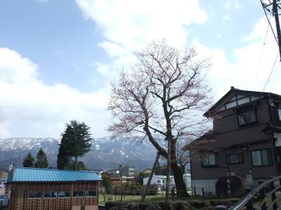 2010.4.3 出丸桜jpg
