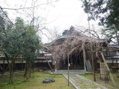 2010.4.5 善徳寺しだれ