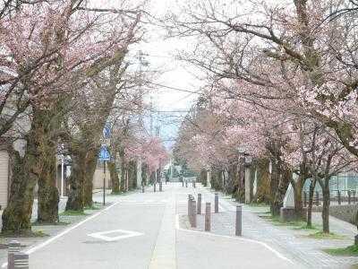 2010.4.5 神明通り