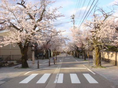 2010.4.14 神明通り