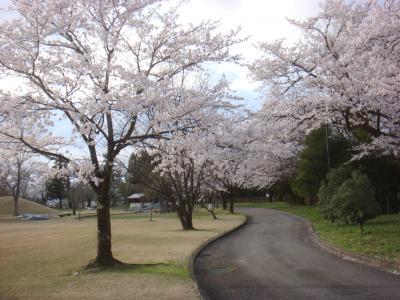 2010 桜写真(城南パーク)