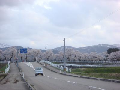 2010 桜写真(城南橋)