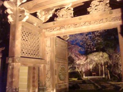 2010 桜写真(式台門としだれ)