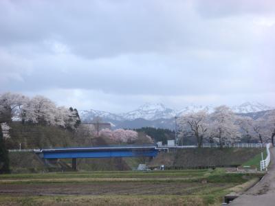 2010 桜写真(城南橋2)