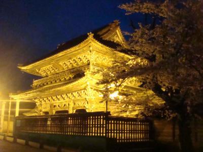 2010 桜写真(金閣寺!?)