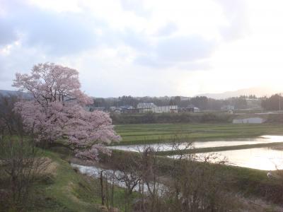 2010 桜写真(向野の桜)