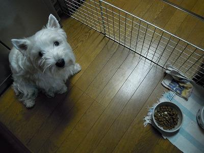 おt-たん、食べさせてくだちゃい
