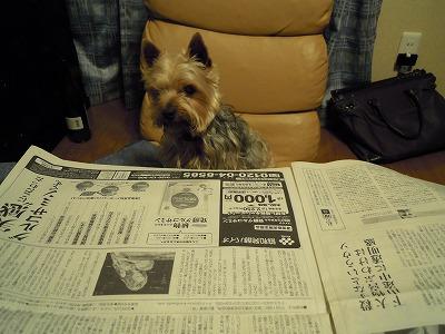 新聞を読むだい