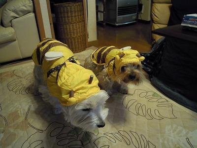 ミツバチのレインコート