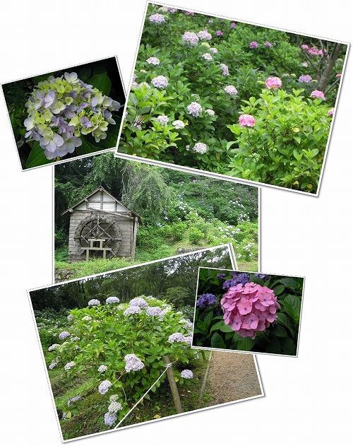 サマーランド 紫陽花園