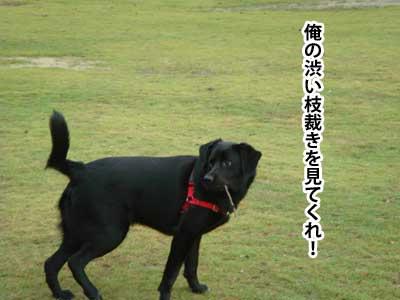 ryouma_003.jpg