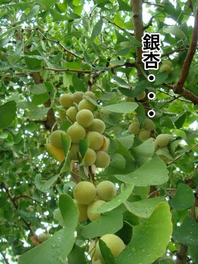 ryouma_008.jpg