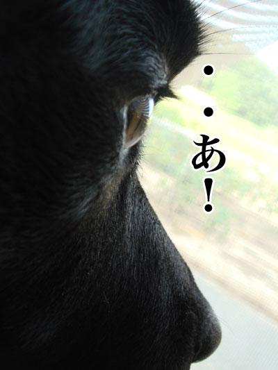 ryouma_026.jpg