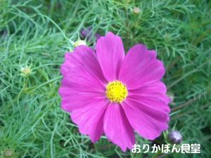 20091011-4.jpg