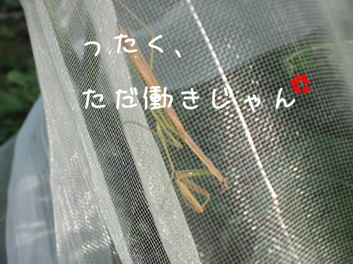 2009_10_29_01.jpg