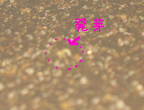 2010_03_04_01.jpg