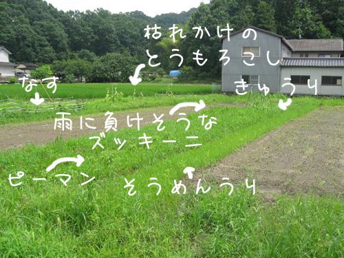 2010_07_15_02.jpg