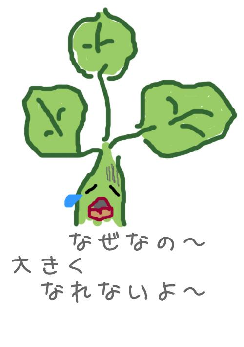 2010_07_15_03.jpg