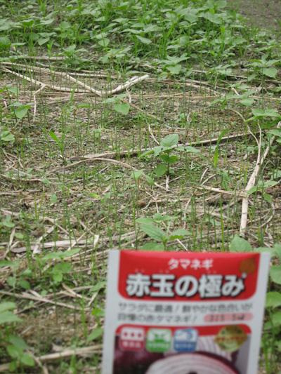 2010_10_15.jpg