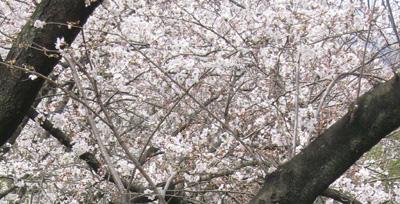 2011_04_07_01.jpg