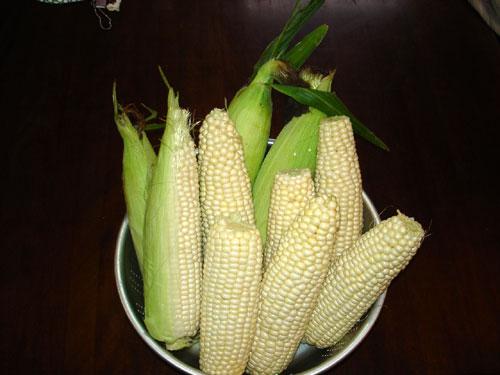 北海道産白トウモロコシ