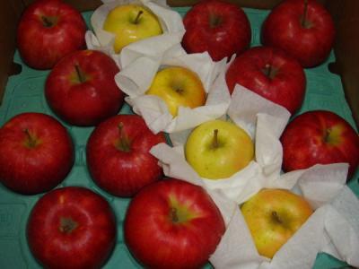 蜜がたっぷり甘~いリンゴです
