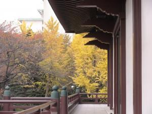 増上寺の黄葉
