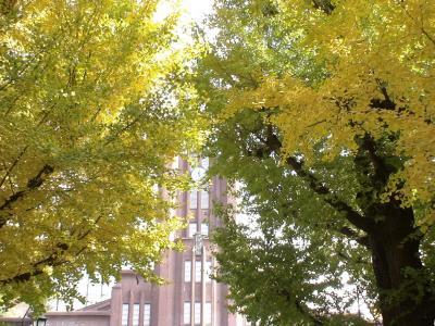 銀杏並木と安田講堂