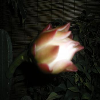 縺輔⊂縺ヲ繧薙▽縺シ縺ソ_convert_20110711163905