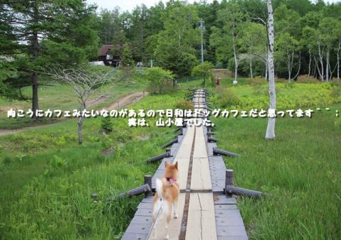 121_20110801105512.jpg