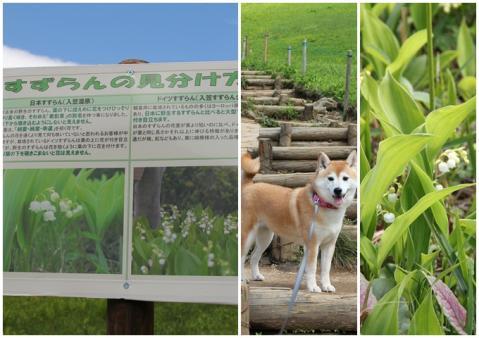 page 入笠山7