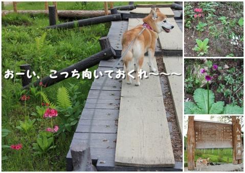 page 入笠山8