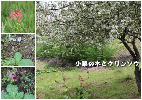 page 入笠山9