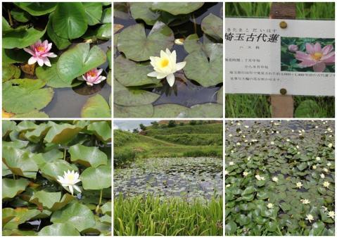 井戸尻史跡公園2